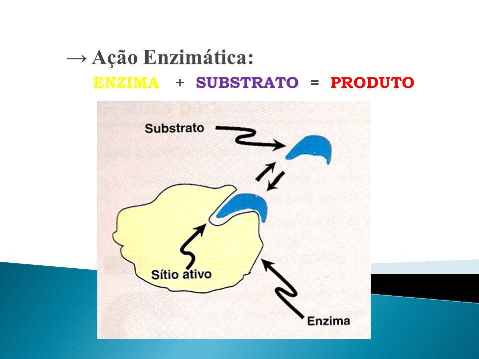→ Ação Enzimática: ENZIMA + SUBSTRATO = PRODUTO