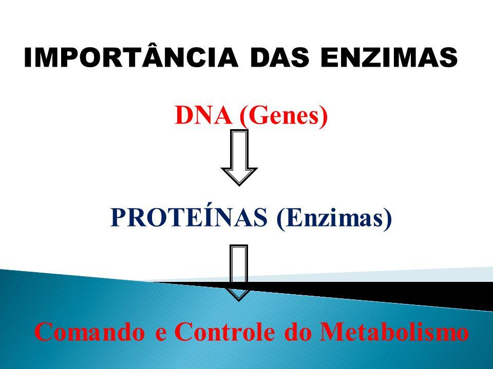 IMPORTÂNCIA DAS ENZIMAS DNA (Genes) PROTEÍNAS (Enzimas) Comando e Controle do Metabolismo