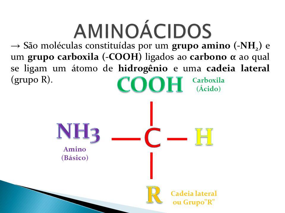 → São moléculas constituídas por um grupo amino (-NH 2 ) e um grupo carboxila (-COOH) ligados ao carbono α ao qual se ligam um átomo de hidrogênio e u