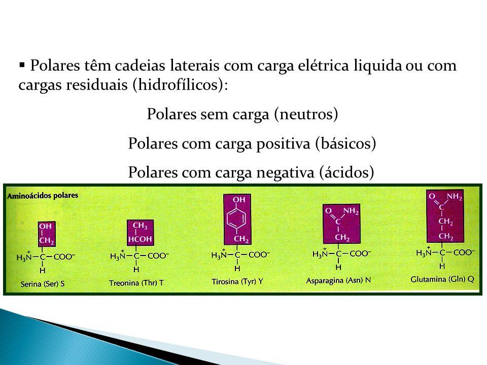  Polares têm cadeias laterais com carga elétrica liquida ou com cargas residuais (hidrofílicos): Polares sem carga (neutros) Polares com carga positi