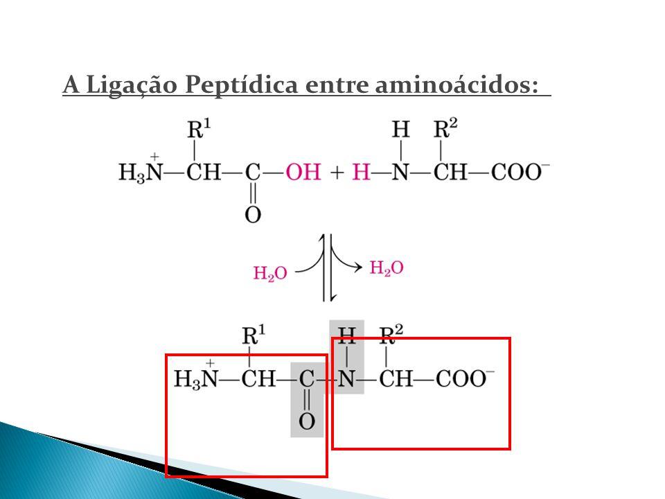 A Ligação Peptídica entre aminoácidos: