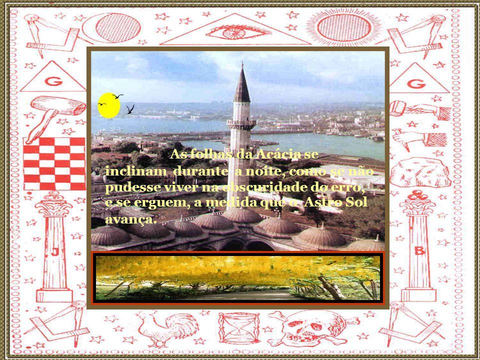 A Acácia é o símbolo do eterno, do imutável.