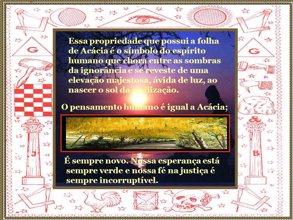 Essa propriedade que possui a folha de Acácia é o símbolo do espírito humano que chora entre as sombras da ignorância e se reveste de uma elevação majestosa, ávida de luz, ao nascer o sol da civilização.