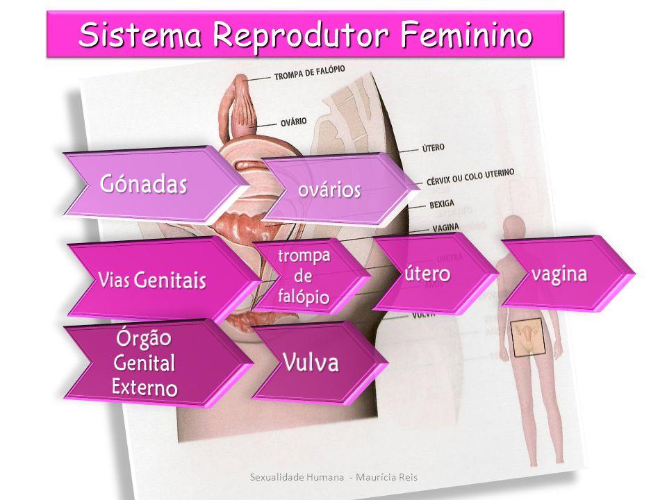 Sistema Reprodutor Feminino Sexualidade Humana - Maurícia Reis