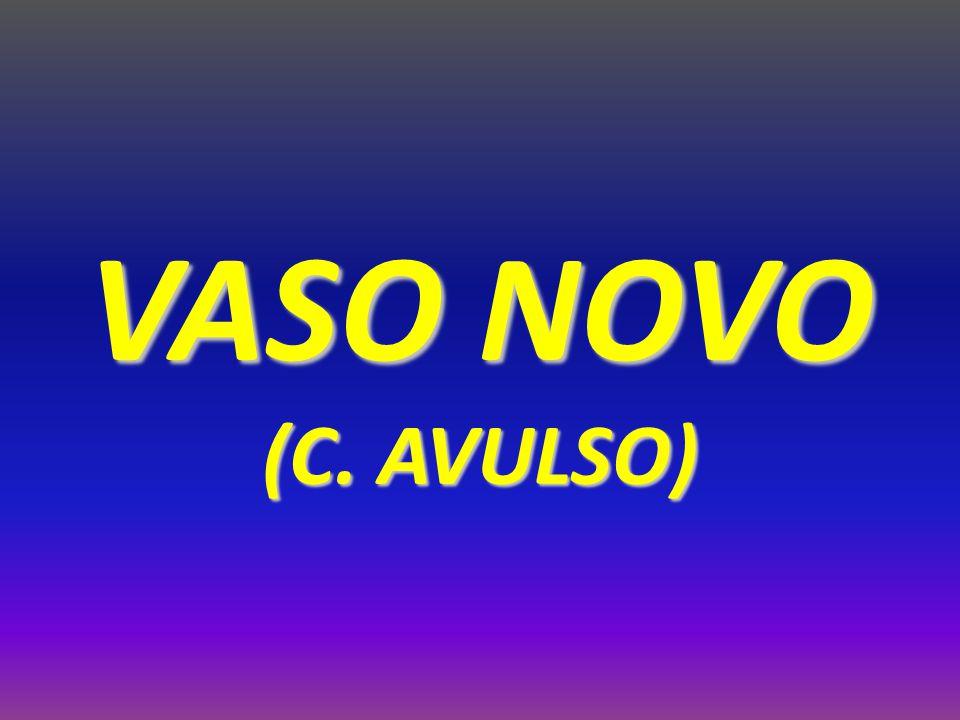 VASO NOVO (C. AVULSO)
