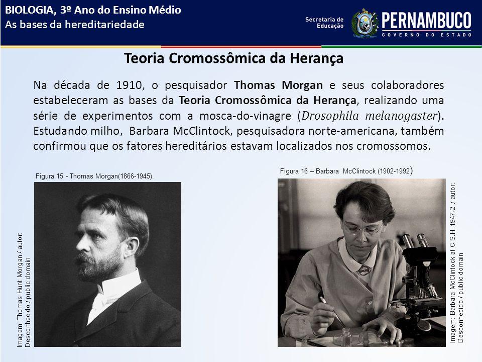 Teoria Cromossômica da Herança Na década de 1910, o pesquisador Thomas Morgan e seus colaboradores estabeleceram as bases da Teoria Cromossômica da Herança, realizando uma série de experimentos com a mosca-do-vinagre ( Drosophila melanogaster ).