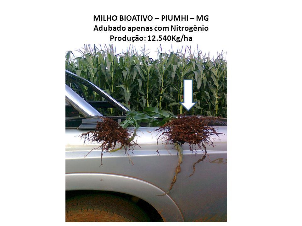 MILHO BIOATIVO – PIUMHI – MG Adubado apenas com Nitrogênio Produção: 12.540Kg/ha