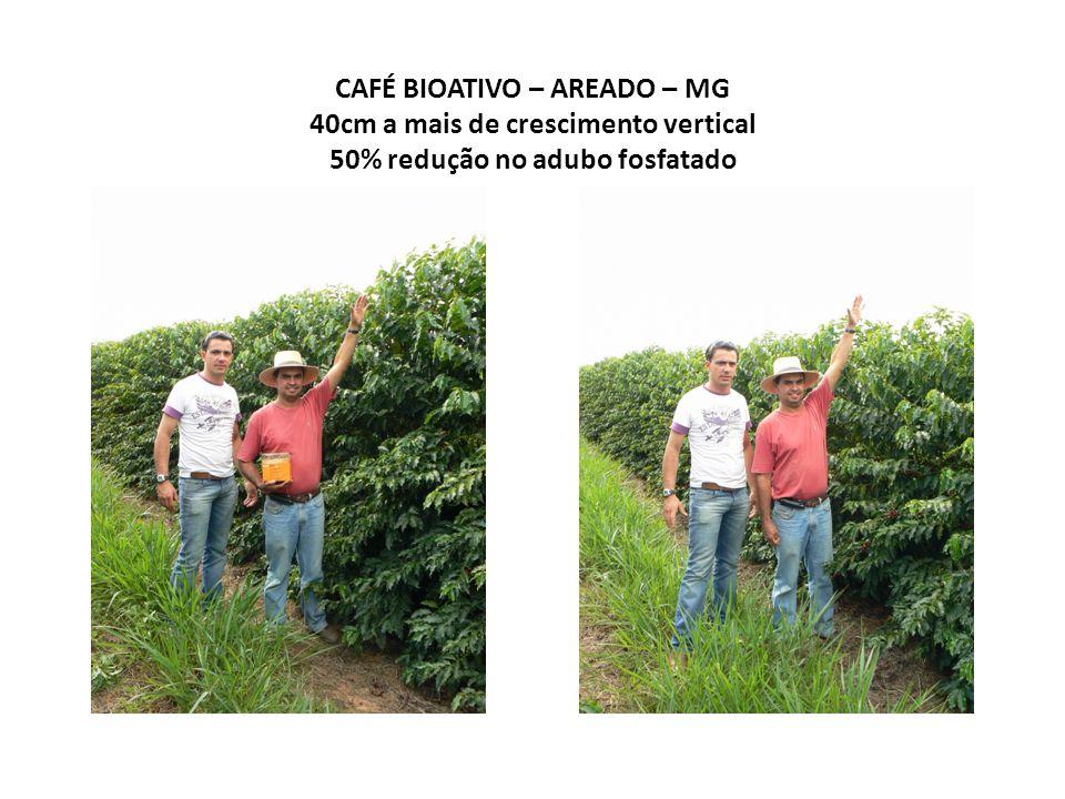CAFÉ BIOATIVO - AREADO – MG Intensa atividade microbiológica no sistema solo-planta