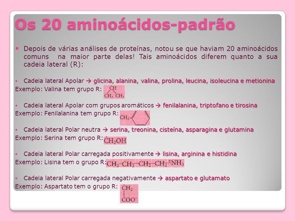 Os 20 aminoácidos-padrão Depois de várias análises de proteínas, notou se que haviam 20 aminoácidos comuns na maior parte delas.
