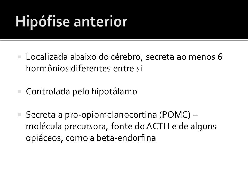  Localizada abaixo do cérebro, secreta ao menos 6 hormônios diferentes entre si  Controlada pelo hipotálamo  Secreta a pro-opiomelanocortina (POMC)