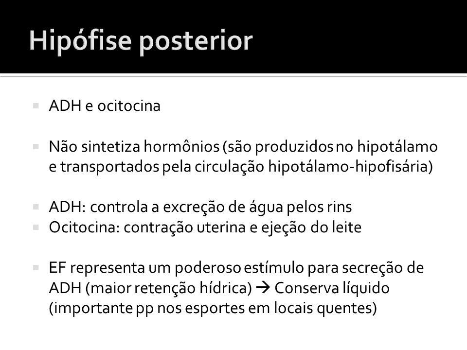  ADH e ocitocina  Não sintetiza hormônios (são produzidos no hipotálamo e transportados pela circulação hipotálamo-hipofisária)  ADH: controla a ex
