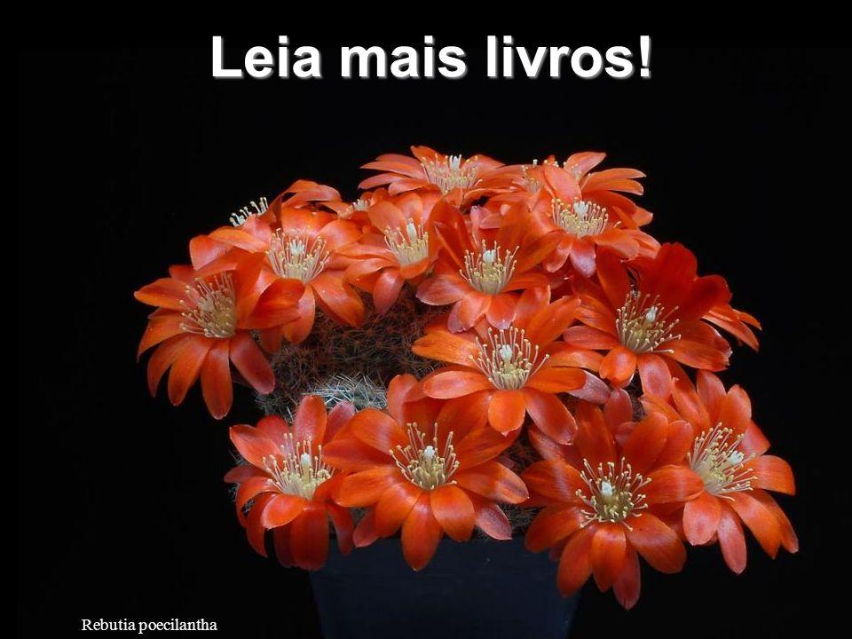 Astrophytum super kabuto Pratique mais esportes.