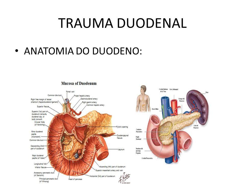 TRAUMA DUODENAL ANATOMIA DO DUODENO:
