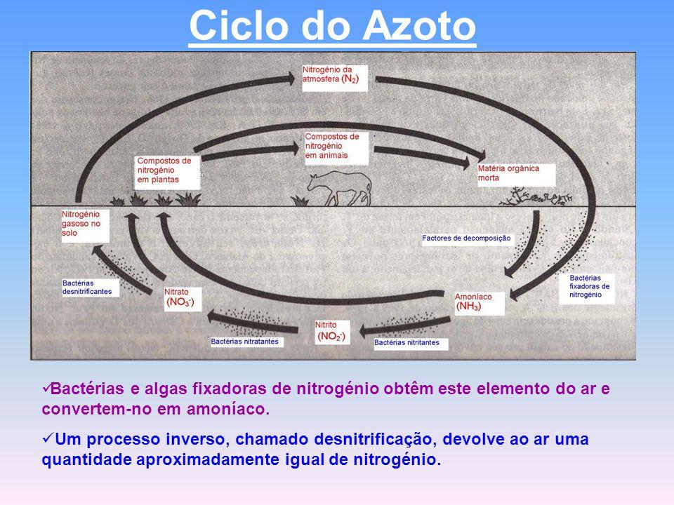 Ciclo do Azoto Bactérias e algas fixadoras de nitrogénio obtêm este elemento do ar e convertem-no em amoníaco.