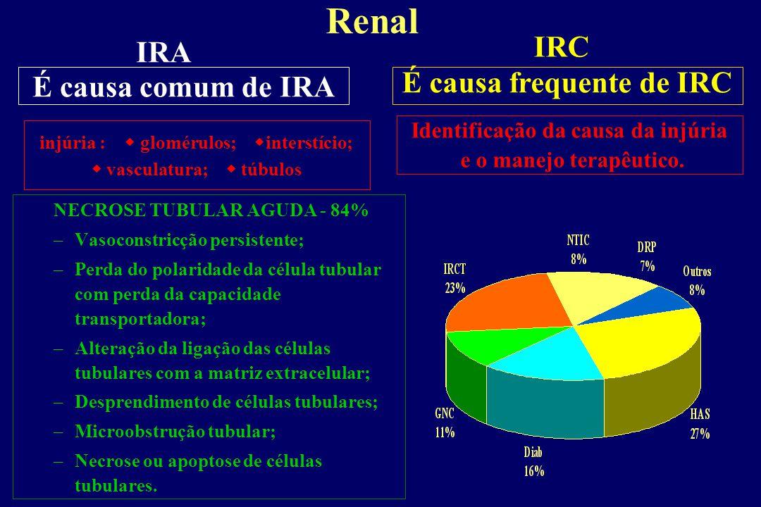 Transição da IRA pré-renal para IRA renal A região cortical recebe a maior parte do fluxo sanguíneo renal, consumindo apenas 10% do oxigênio que lhes