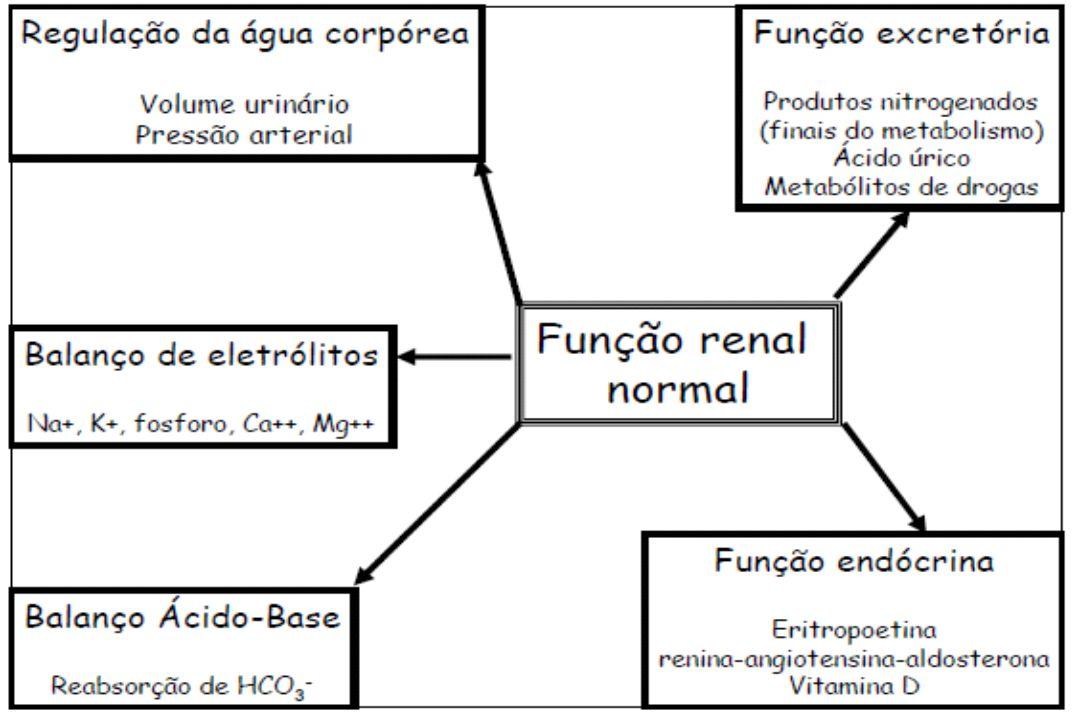 Paulo César de Oliveira FISIOPATOLOGIA DA DOENÇA RENAL