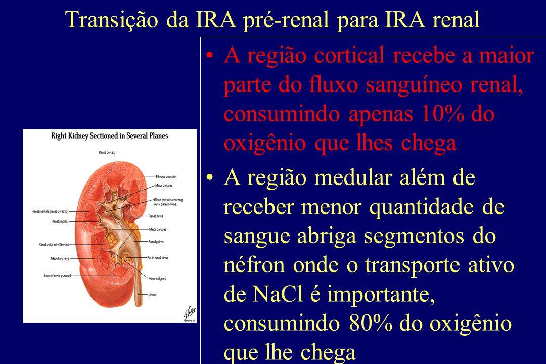 Pré - Renal Hipoperfusão renal  ativação do SRAA e ADH  intensa reabsorção de íons e água Causas : depleção de volume; volume arterial ineficaz; ocl