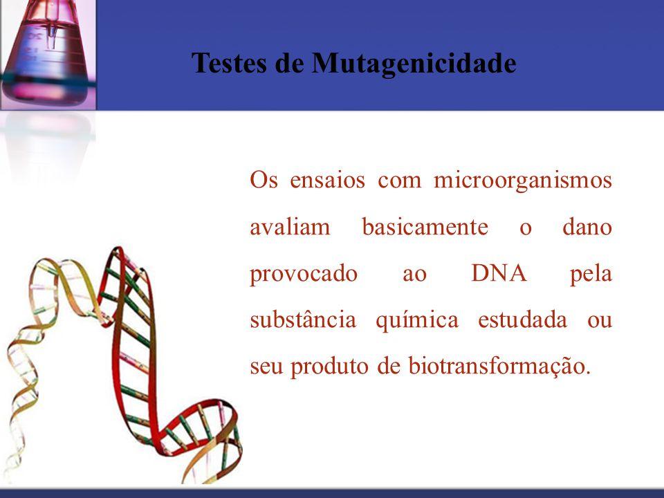 Testes de Mutagenicidade Os ensaios com microorganismos avaliam basicamente o dano provocado ao DNA pela substância química estudada ou seu produto de