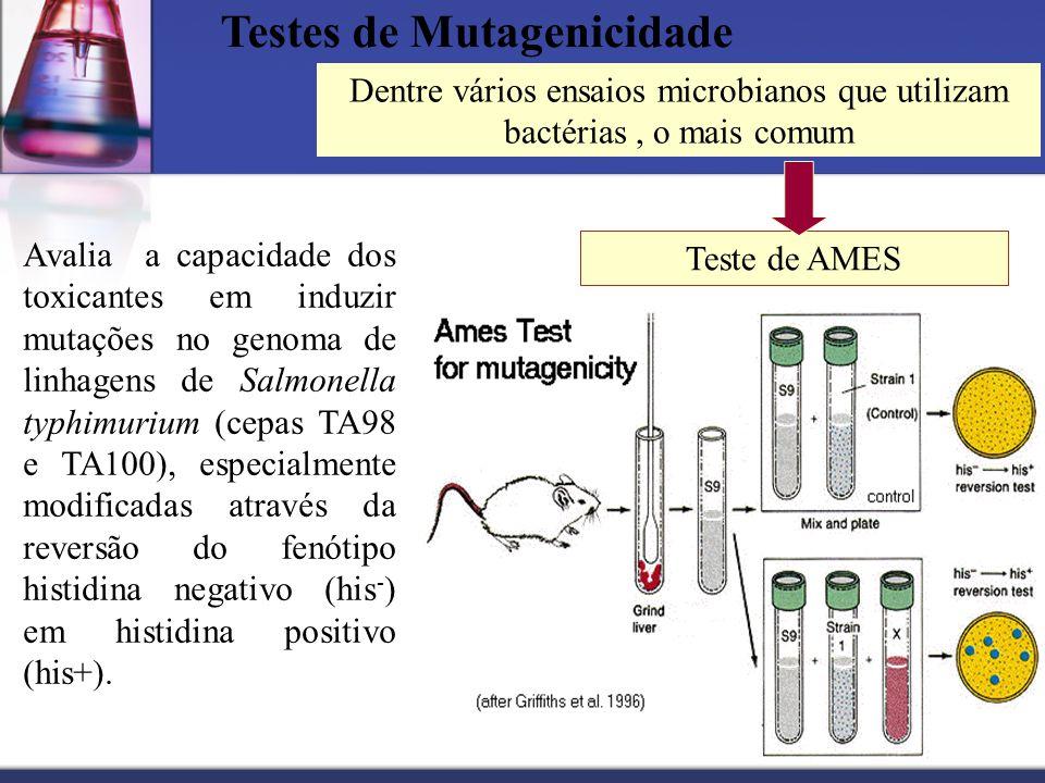 Testes de Mutagenicidade Teste de AMES Avalia a capacidade dos toxicantes em induzir mutações no genoma de linhagens de Salmonella typhimurium (cepas