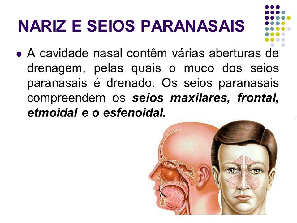 NARIZ E SEIOS PARANASAIS A cavidade nasal contêm várias aberturas de drenagem, pelas quais o muco dos seios paranasais é drenado.