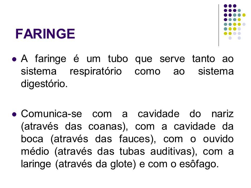 FARINGE A faringe é um tubo que serve tanto ao sistema respiratório como ao sistema digestório.