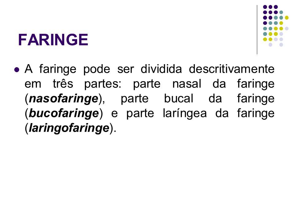 A faringe pode ser dividida descritivamente em três partes: parte nasal da faringe (nasofaringe), parte bucal da faringe (bucofaringe) e parte laríngea da faringe (laringofaringe).
