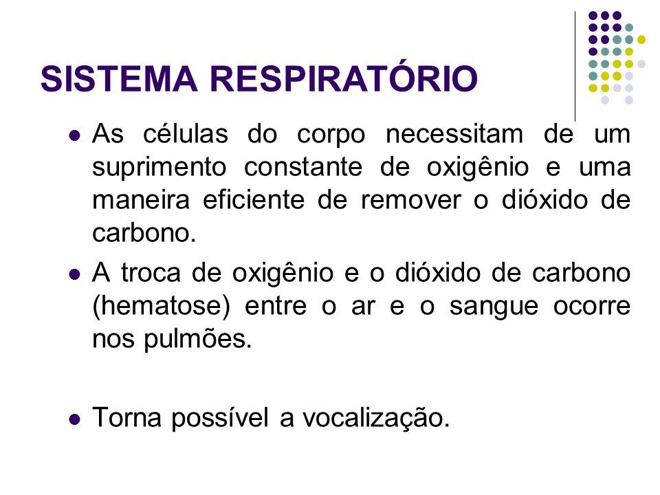 SISTEMA RESPIRATÓRIO As células do corpo necessitam de um suprimento constante de oxigênio e uma maneira eficiente de remover o dióxido de carbono.
