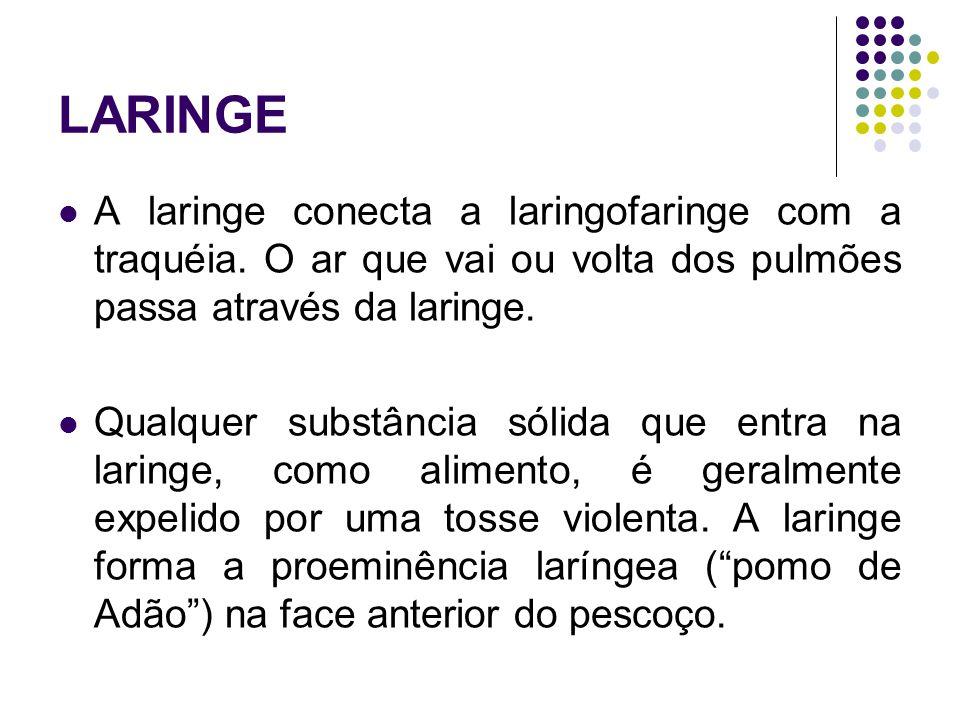 LARINGE A laringe conecta a laringofaringe com a traquéia.