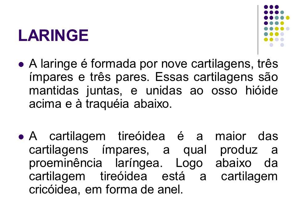 LARINGE A laringe é formada por nove cartilagens, três ímpares e três pares.