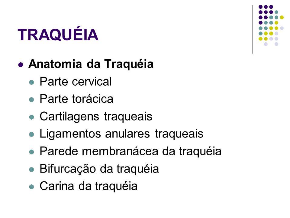 TRAQUÉIA Anatomia da Traquéia Parte cervical Parte torácica Cartilagens traqueais Ligamentos anulares traqueais Parede membranácea da traquéia Bifurcação da traquéia Carina da traquéia
