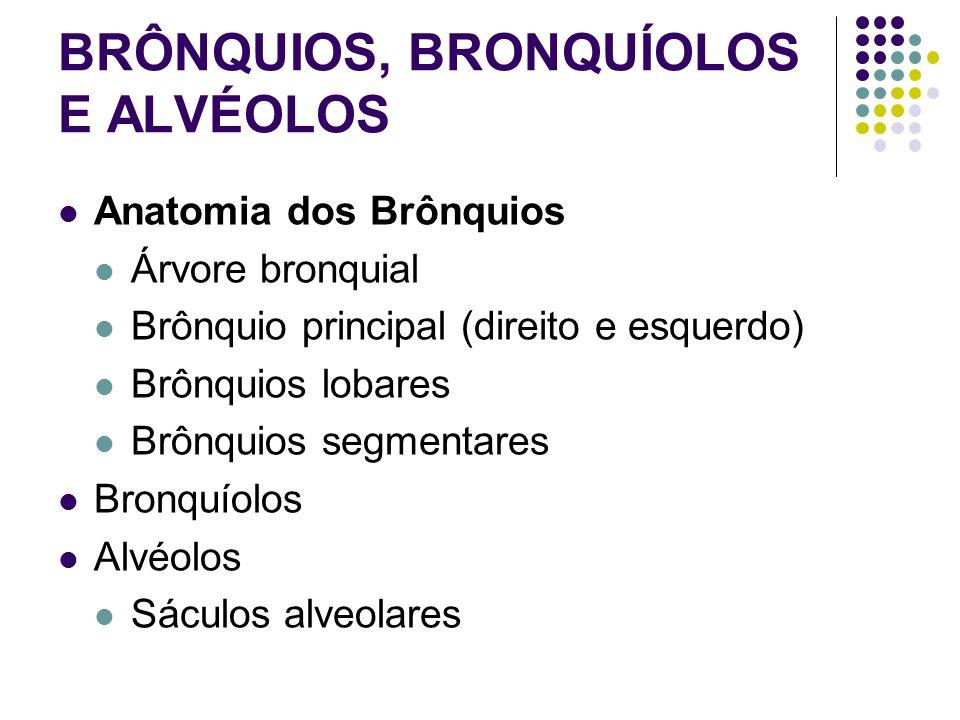 BRÔNQUIOS, BRONQUÍOLOS E ALVÉOLOS Anatomia dos Brônquios Árvore bronquial Brônquio principal (direito e esquerdo) Brônquios lobares Brônquios segmentares Bronquíolos Alvéolos Sáculos alveolares