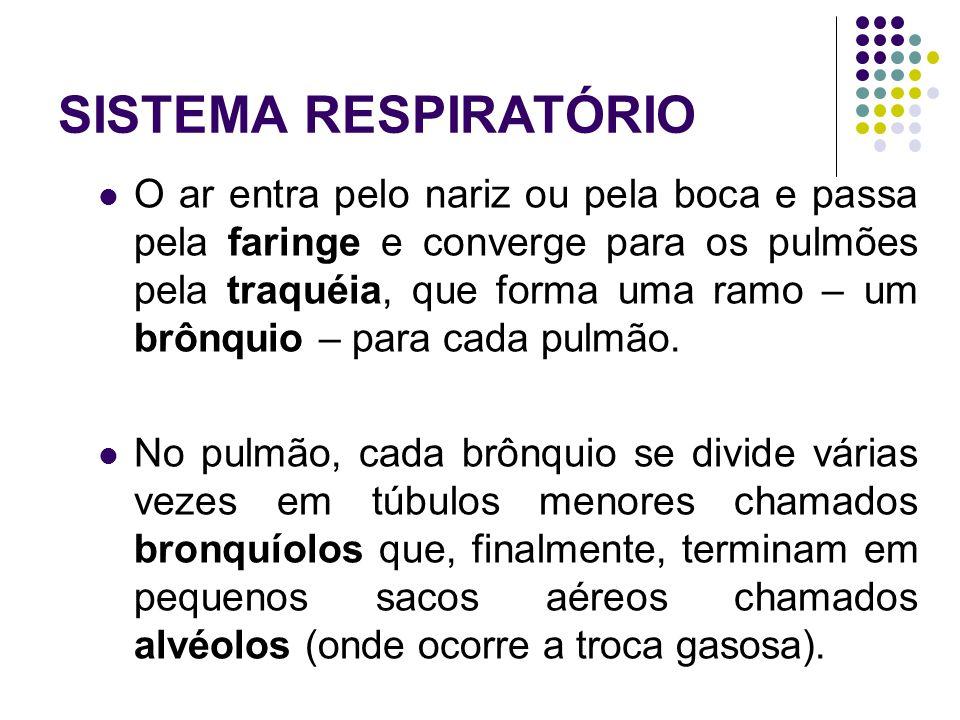 SISTEMA RESPIRATÓRIO Divisão PORÇÃO DE CONDUÇÃO PORÇÃO DE RESPIRAÇÃO