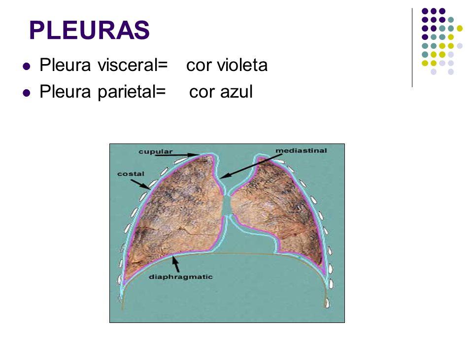 PLEURAS Pleura visceral= cor violeta Pleura parietal= cor azul