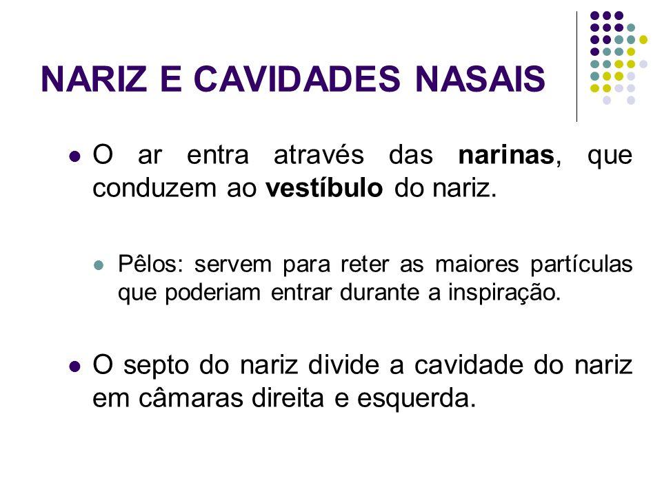NARIZ E CAVIDADES NASAIS