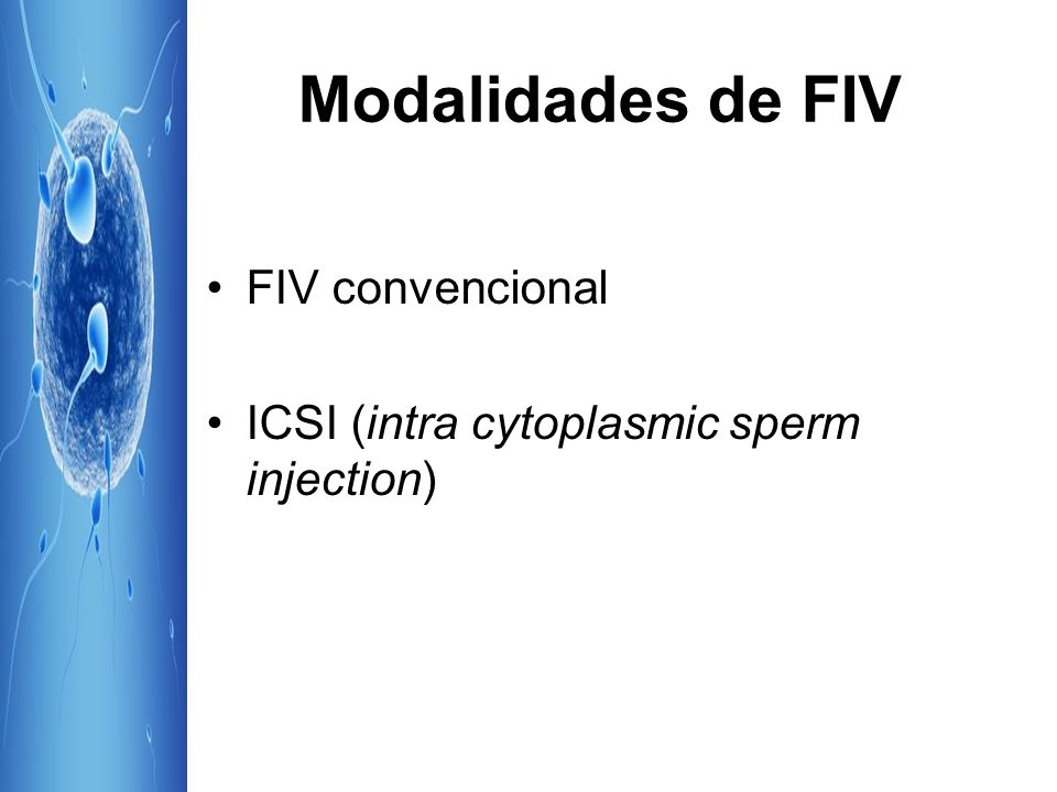 Modalidades de FIV FIV convencional ICSI (intra cytoplasmic sperm injection)
