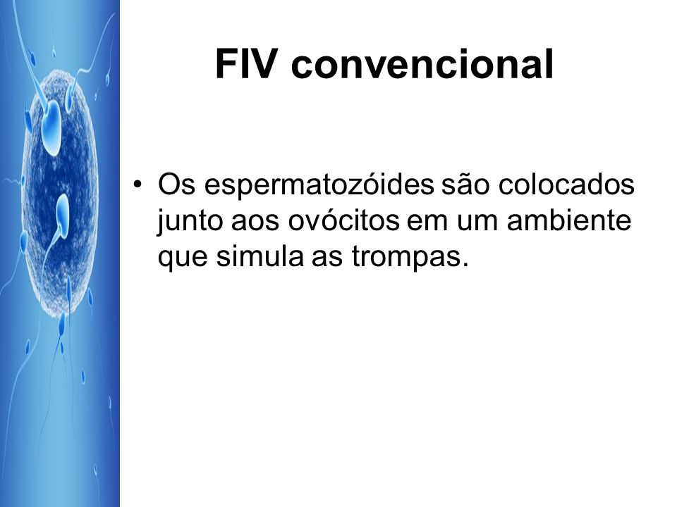 FIV convencional Os espermatozóides são colocados junto aos ovócitos em um ambiente que simula as trompas.