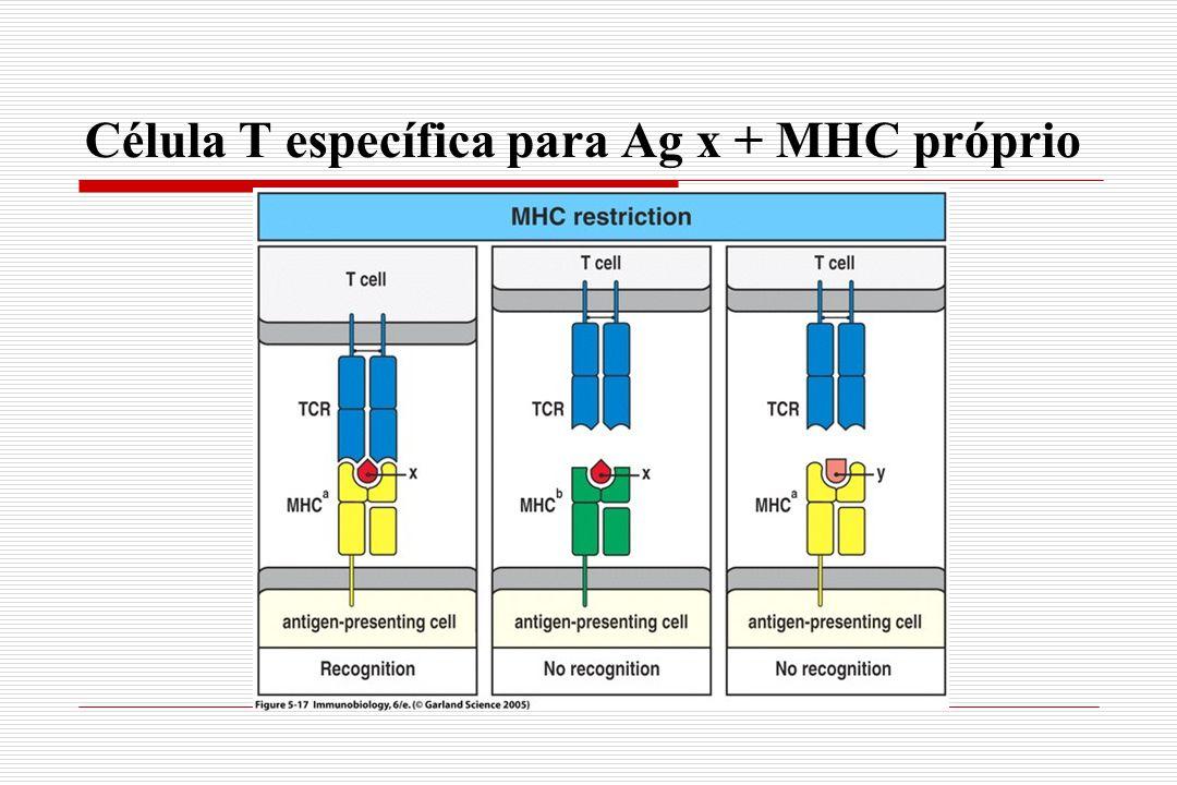 Célula T específica para Ag x + MHC próprio