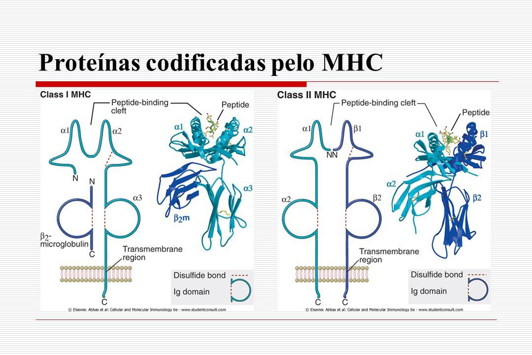 Proteínas codificadas pelo MHC