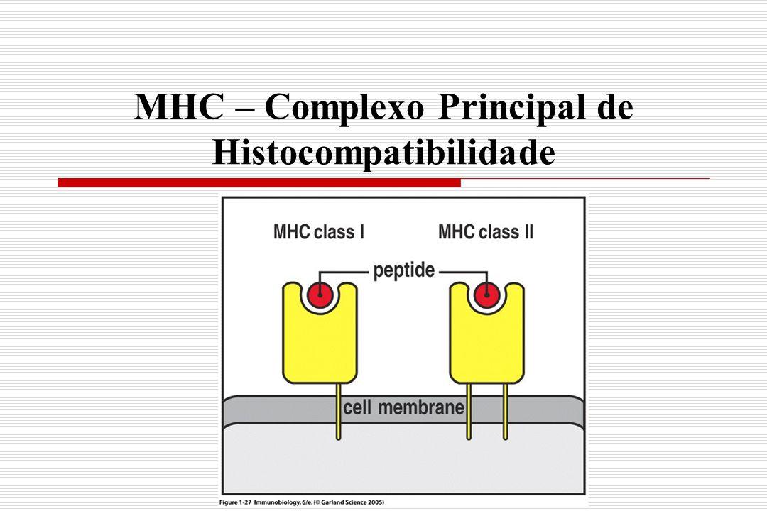 Complexo peptídeo:MHC  MHC demonstram ampla especificidade em relação à ligação de Ags  TCR são responsáveis pelo fino reconhecimento (especificidade)  Polimorfismo (AA) determina a especifidade de ligação ao peptídeo o reconhecimento pela células T  MHC não discriminam peptídeos estranhos dos próprios
