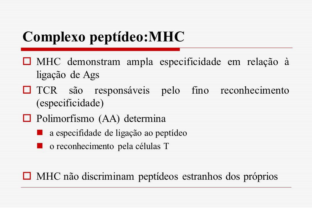 Complexo peptídeo:MHC  MHC demonstram ampla especificidade em relação à ligação de Ags  TCR são responsáveis pelo fino reconhecimento (especificidad
