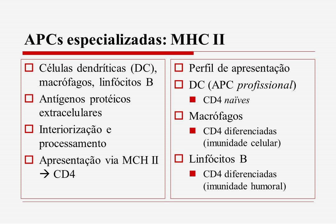 APCs especializadas: MHC II  Células dendríticas (DC), macrófagos, linfócitos B  Antígenos protéicos extracelulares  Interiorização e processamento