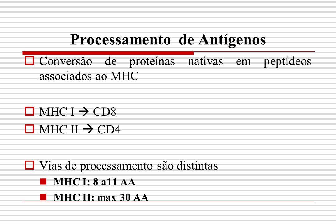 Processamento de Antígenos  Conversão de proteínas nativas em peptídeos associados ao MHC  MHC I  CD8  MHC II  CD4  Vias de processamento são di
