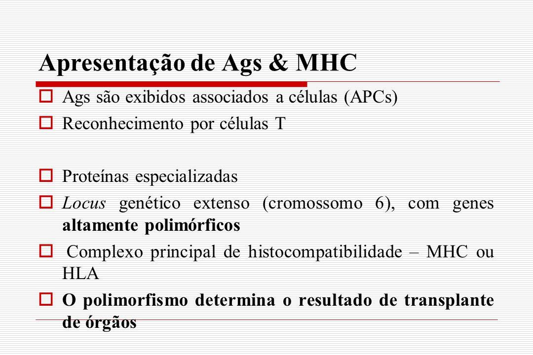 Apresentação de Ags & MHC  Ags são exibidos associados a células (APCs)  Reconhecimento por células T  Proteínas especializadas  Locus genético ex