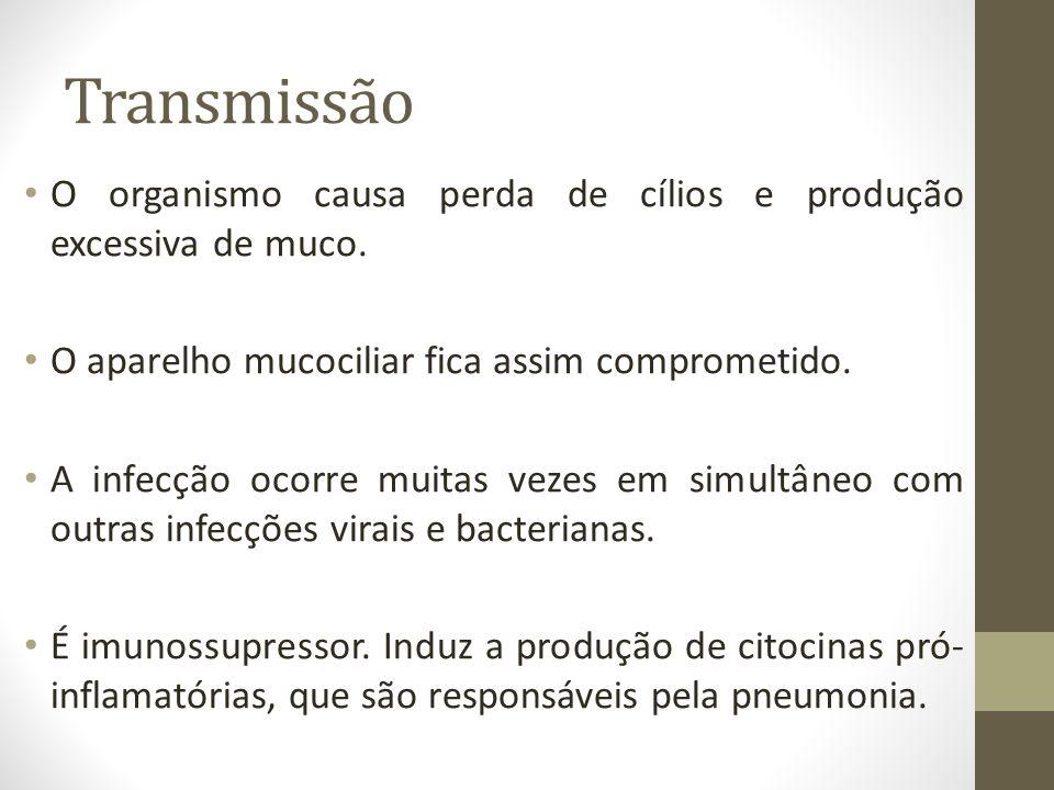 Transmissão O organismo causa perda de cílios e produção excessiva de muco. O aparelho mucociliar fica assim comprometido. A infecção ocorre muitas ve
