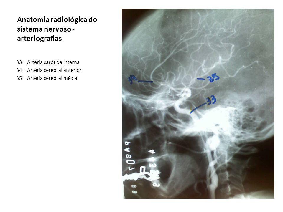 Anatomia radiológica do sistema nervoso - arteriografias 33 – Artéria carótida interna 34 – Artéria cerebral anterior 35 – Artéria cerebral média