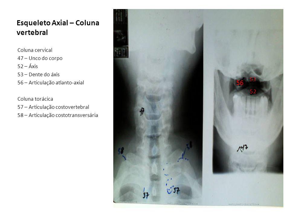 Esqueleto Axial – Coluna vertebral Coluna cervical 47 – Unco do corpo 52 – Áxis 53 – Dente do áxis 56 – Articulação atlanto-axial Coluna torácica 57 –
