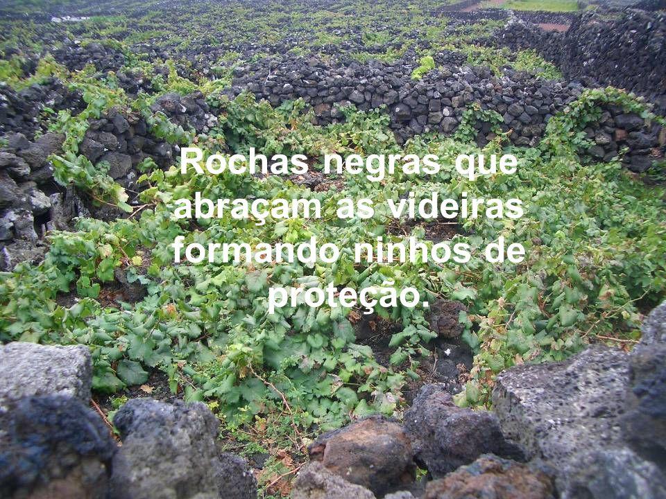 Rochas negras presentes nas plantações...