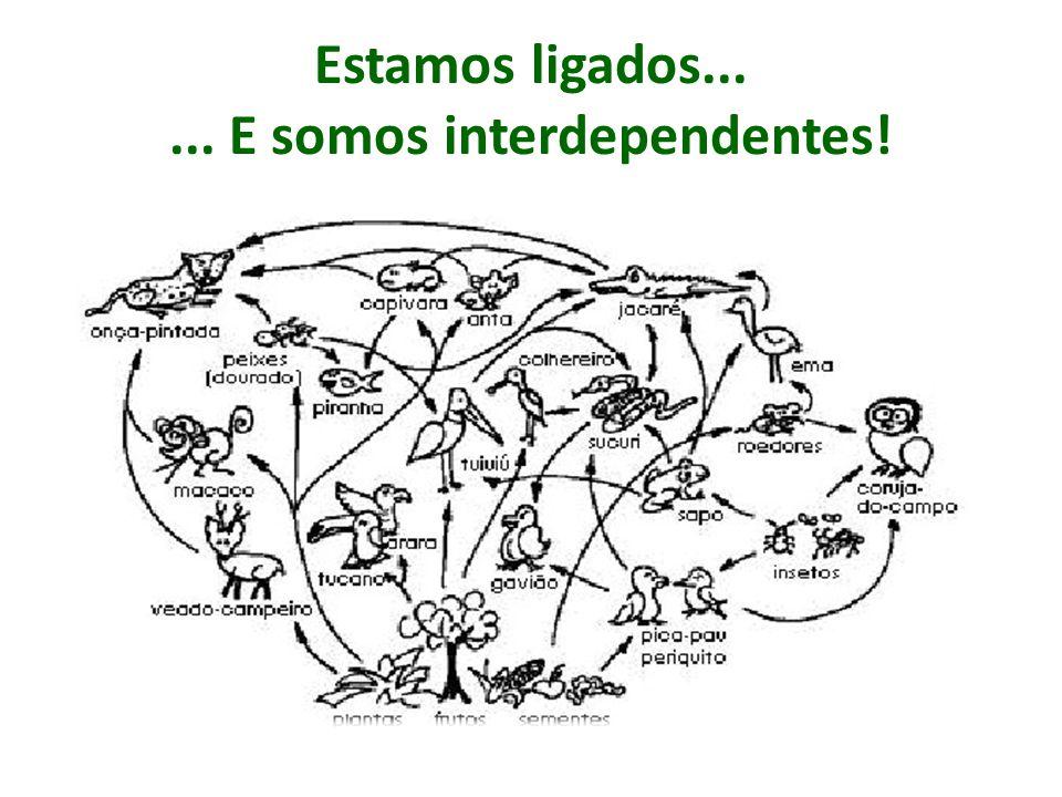 Estamos ligados...... E somos interdependentes!