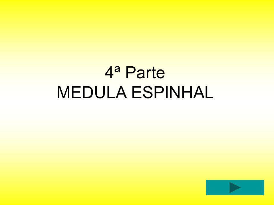 4ª Parte MEDULA ESPINHAL