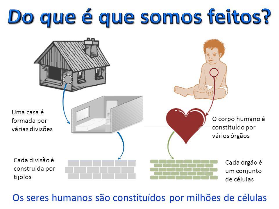 Os seres humanos são constituídos por milhões de células Uma casa é formada por várias divisões O corpo humano é constituído por vários órgãos Cada divisão é construída por tijolos Cada órgão é um conjunto de células